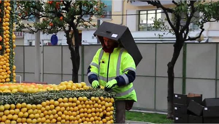 Préparation de la fête du Citron de Menton @fete_du_citron